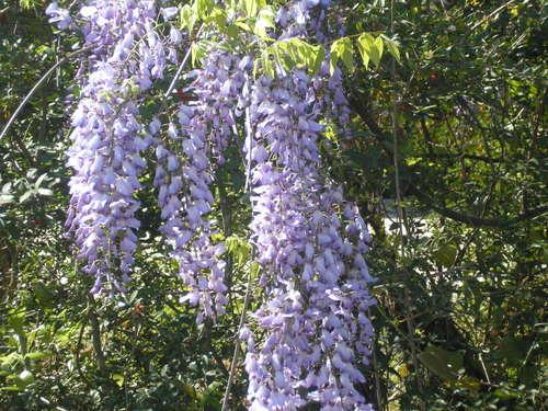 Spring_2008_004_2